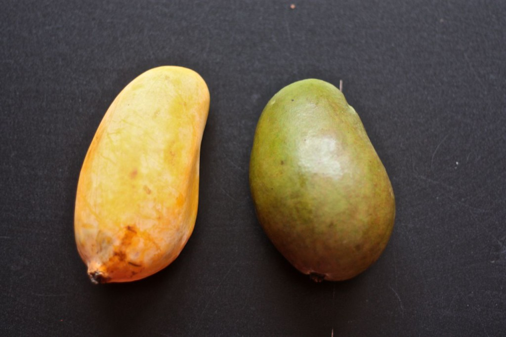 Tommy Atkins versus indické mango.
